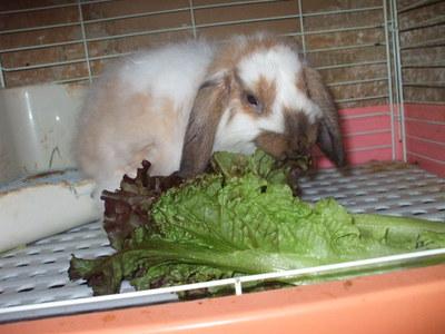 箱ウサギ3
