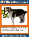 迷子猫保護ポスター