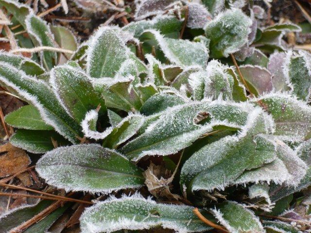 P1130073霜