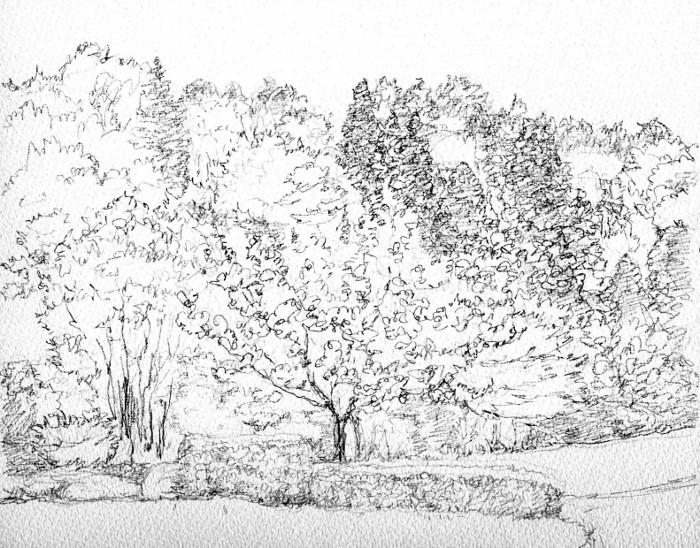 山の公園に咲く桜 デッサン (700x548)