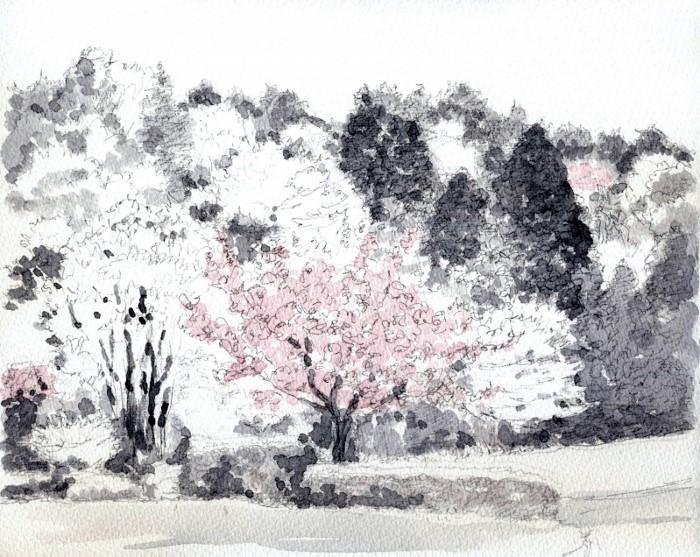 山の公園に咲く桜 グリザイユ (700x557)