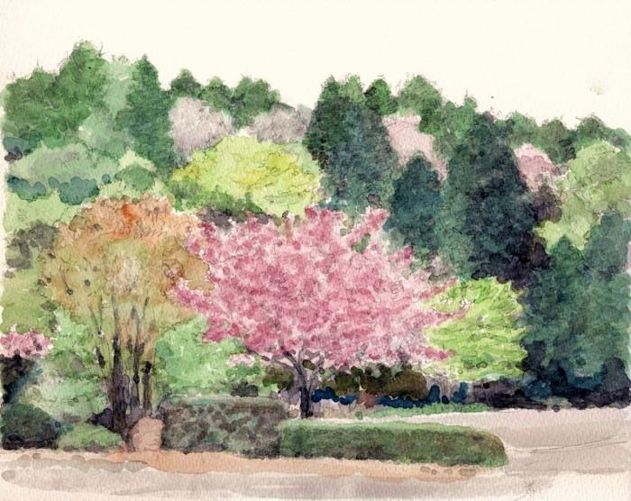 山の公園に咲く桜 (700x556)