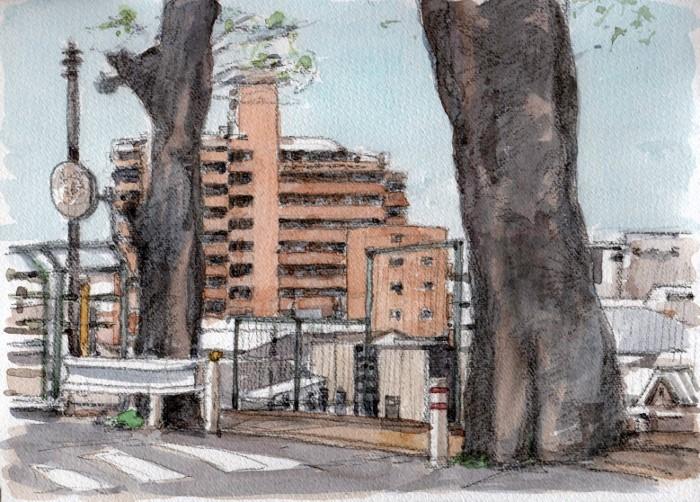 香里園駅前道路の古木 (700x502)