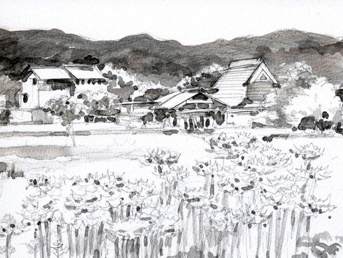 亀岡の彼岸花 グリザイユ (700x527)