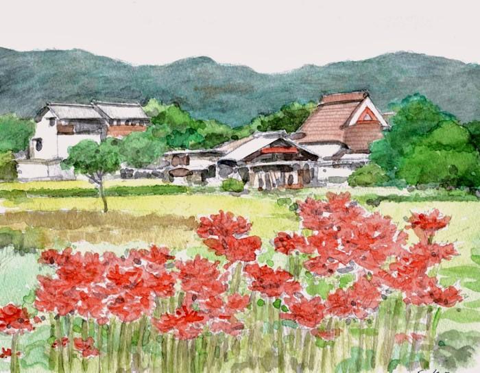 亀岡の彼岸花 F3 (700x544)