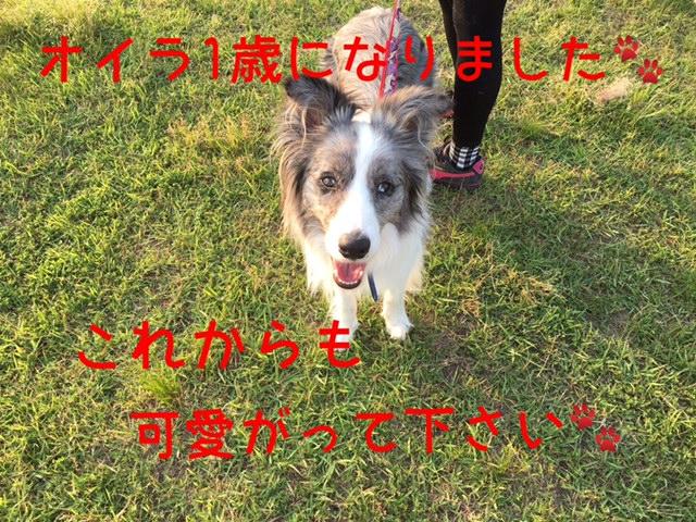 2016052614.jpg