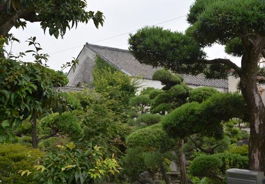 160702-132657-伊勢崎 (50)_R