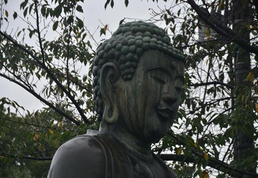 160924-160815-音羽御殿・護国寺 (367)_R
