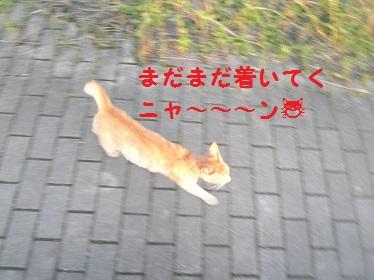 P6180075.jpg