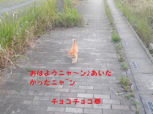 P6180081.jpg