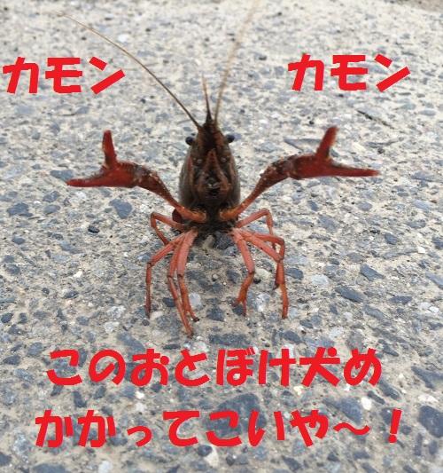 IMG_9776484.jpg