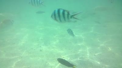水中の魚(Lumiaで撮影)