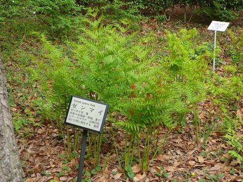 都立薬用植物園 山野草