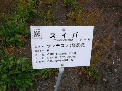 都立薬用植物園 薬草など
