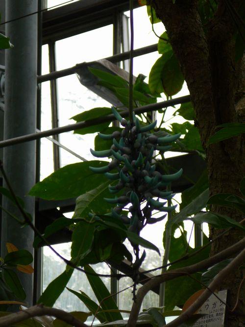 種まきと都立薬用植物園