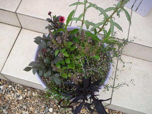 初夏の寄せ植え