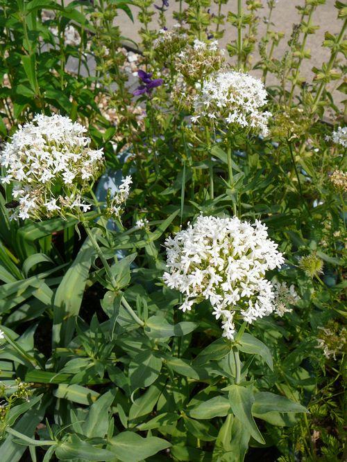 白い花で納涼