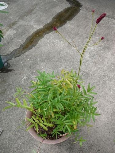 花壇のレイアウト