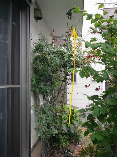 断捨離と今日の花