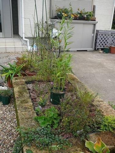 花壇の植え込み完了