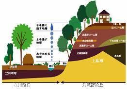 8月会報国分寺崖線1