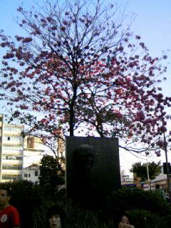 ブラジル ケイタイ 046