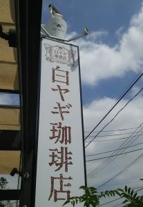 shiroyagi1.jpg