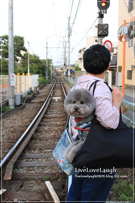 IMG_8993りーふ2