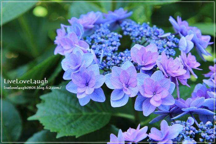 IMG_0587YEG6-12