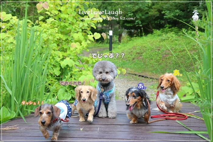 IMG_3994やまなかこ16-2