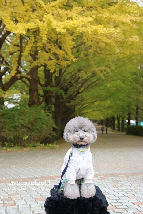 IMG_9264しょわきね12