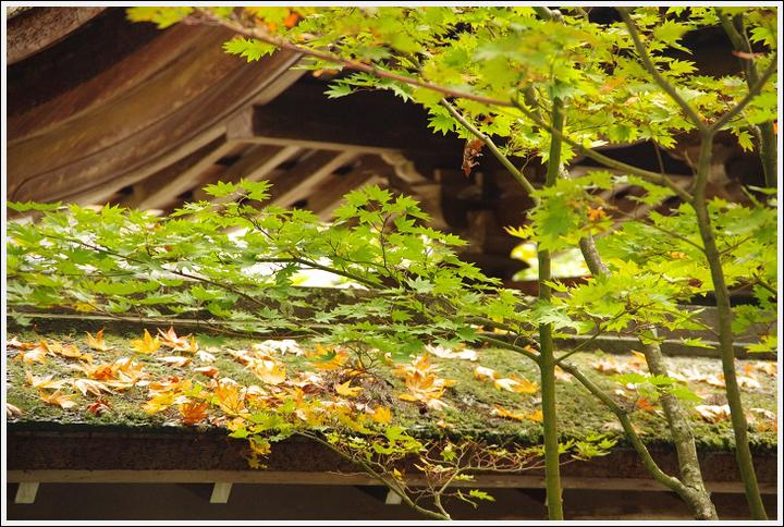 2016年11月1日 高野山ツーリング (6)