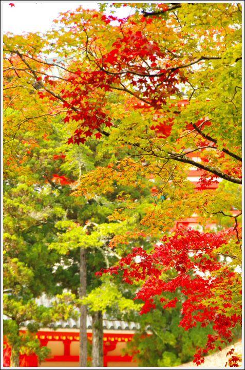 2016年11月1日 高野山 (2)