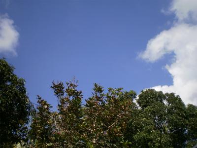 P4120033.jpg