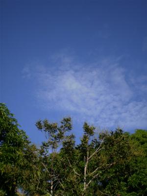 P7120110.jpg