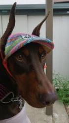 Brianna 帽子
