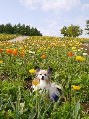 春の那須7