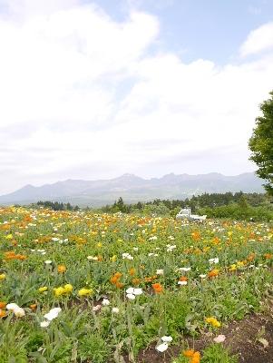 春の那須9