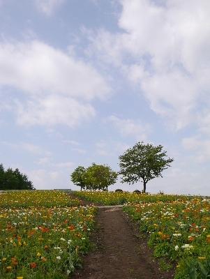 春の那須12
