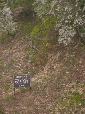 春の那須2−6