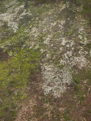 春の那須2−7
