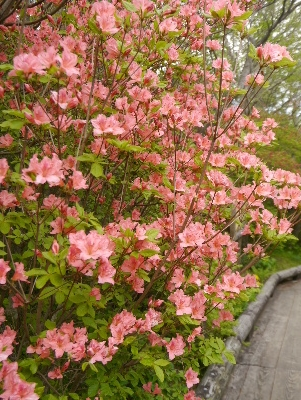 春の那須3−2