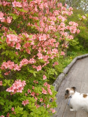 春の那須3−3