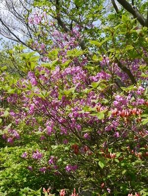 春の那須3−8