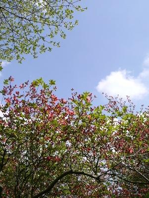 春の那須3−10