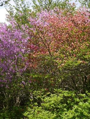 春の那須3−11
