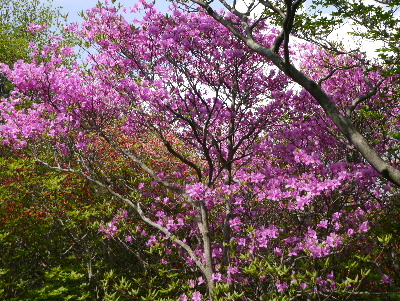 春の那須3−13