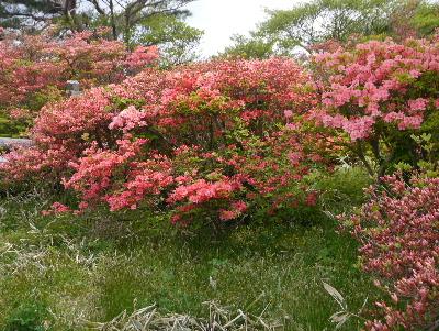 春の那須3−16