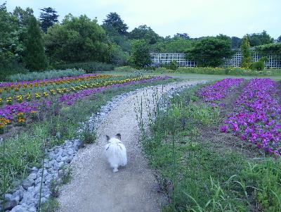 2016花ファンタジア19