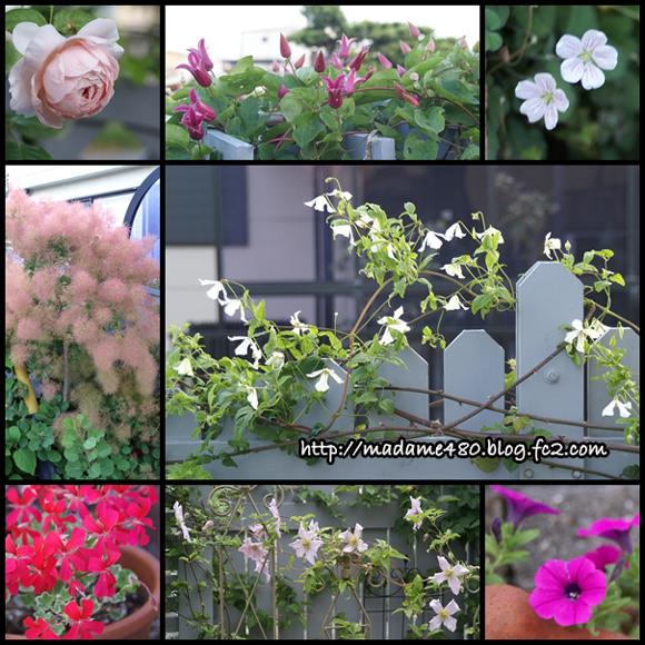 2016-5月後半の庭web用F